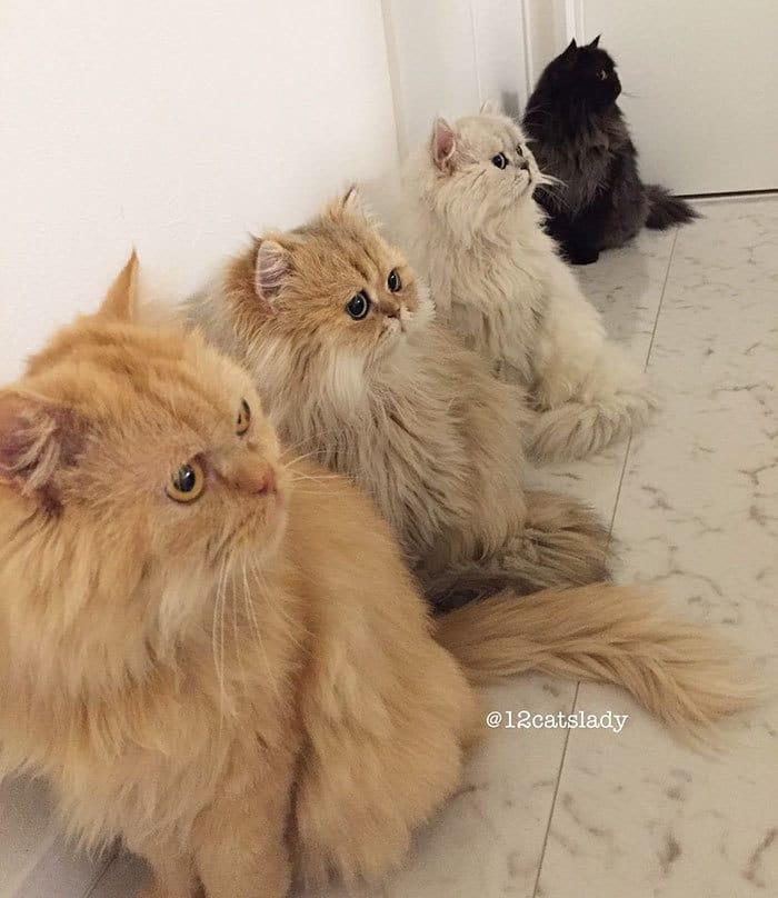 12-cats-lady-japan-29