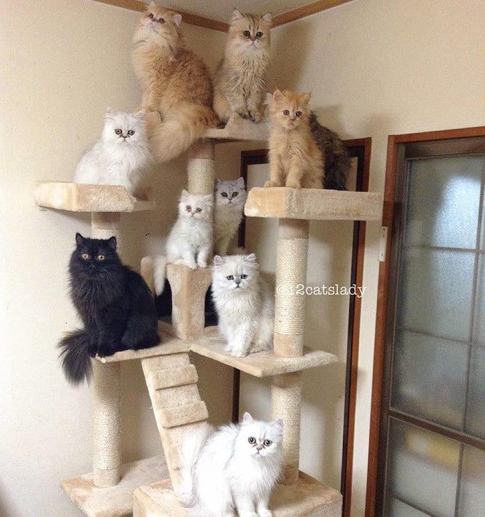12-cats-lady-japan-40