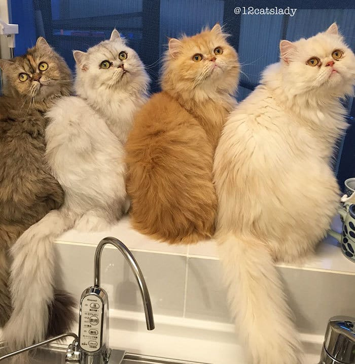 12-cats-lady-japan-42