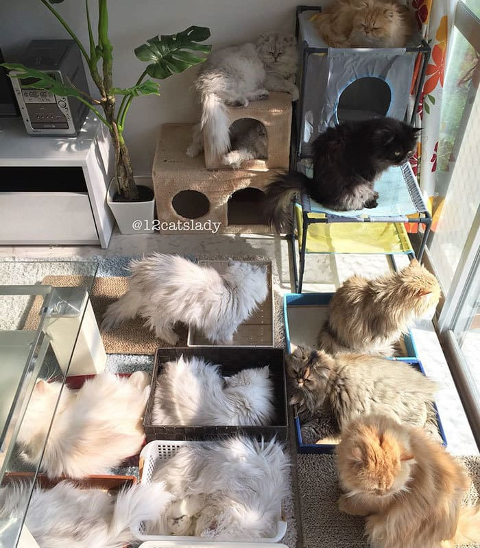 12-cats-lady-japan-49