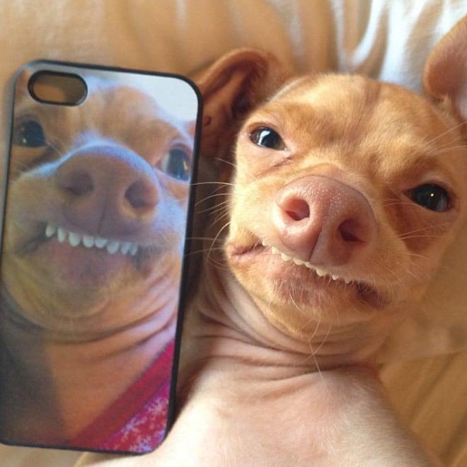 9. Si tuviese un perro así, también lo tendría en mi celular
