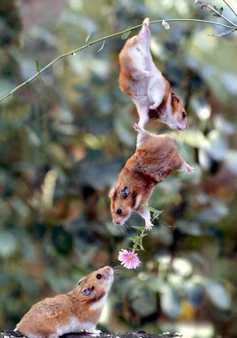 19. 20 of the Most Adorable Acts of Teamwork