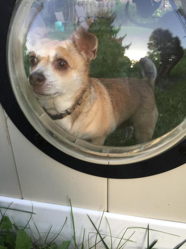 Когда твои собаки любят посмотреть на прохожих) собака, забор, иллюминатор, длиннопост