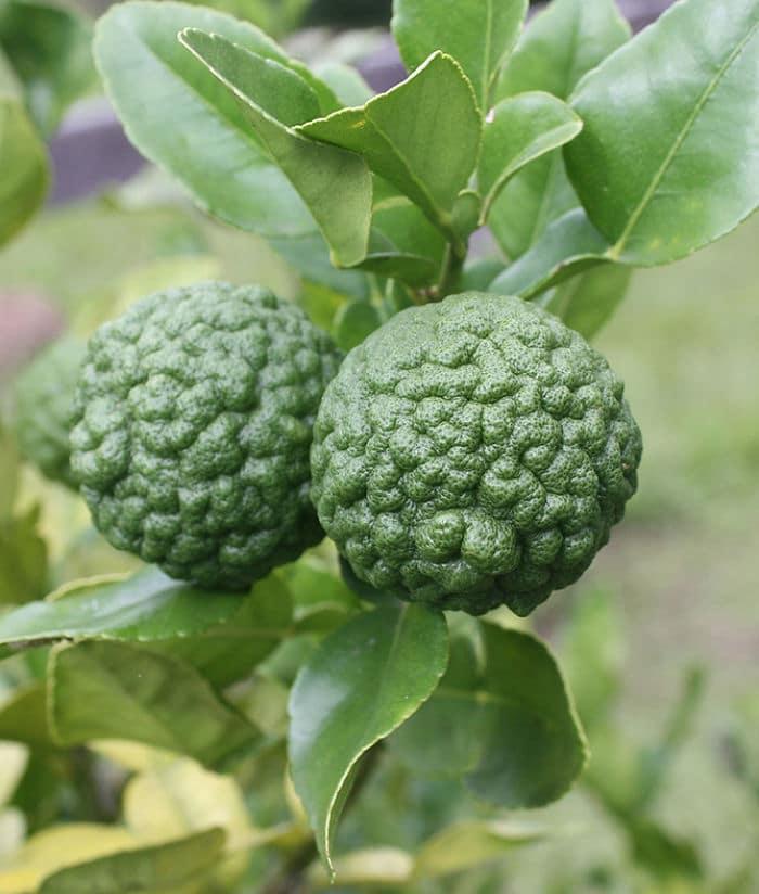 Markut Lime