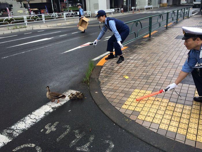Японские офицеры полиции помогает Утиная семья Креста Дорога