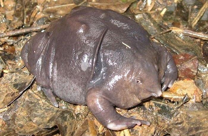 9. Пурпурная лягушка животные, природа, странности