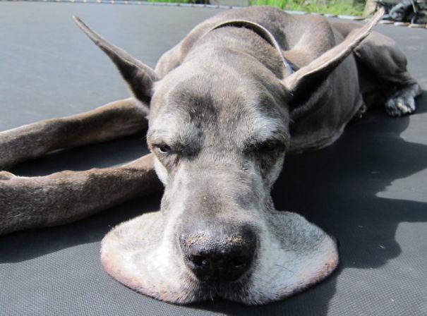 Эта собака Таяние