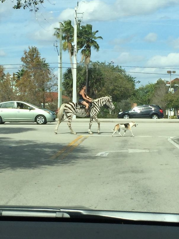 My Sister Lives In Florida And Sends Some Weird Pictures Of People. This Was Most Recent