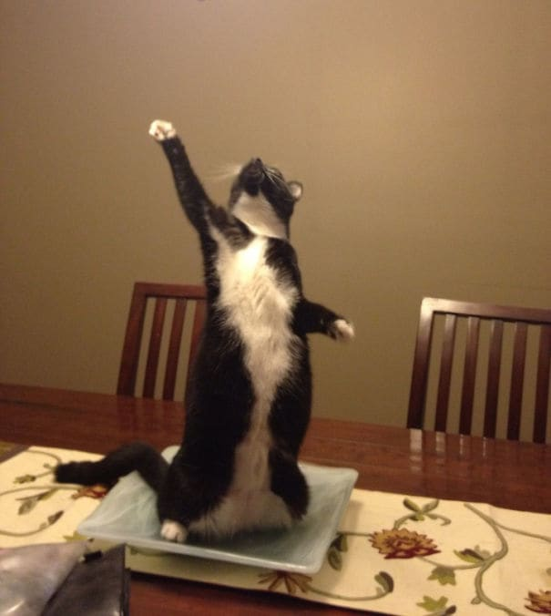 Triumphant Cat