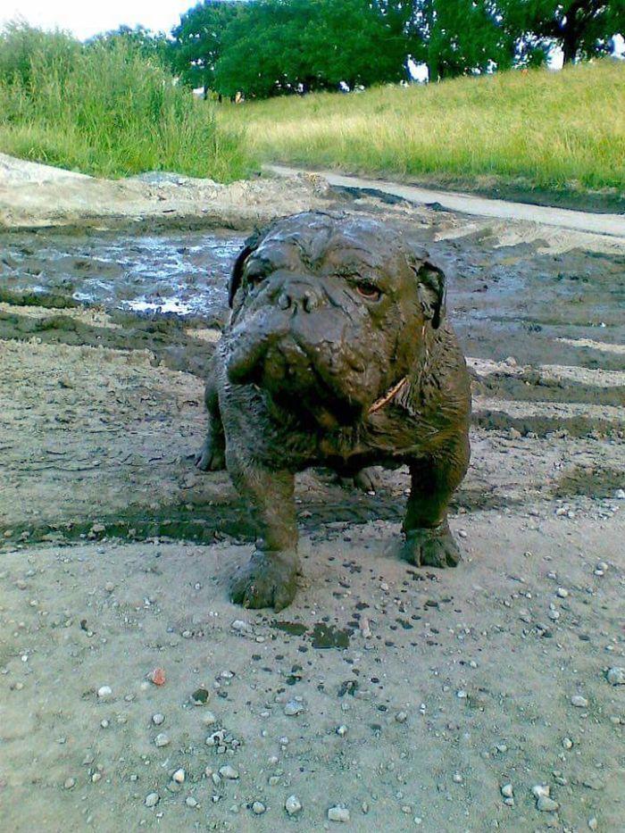 My Dog Has Mud Skills Man