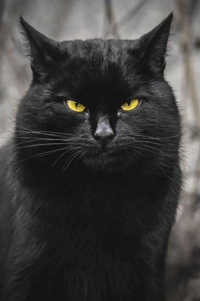 Portraits Of Stray Cats