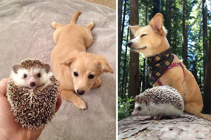 Biddy The Hedgehog And His Sister Charlie The First Day They Met And Now