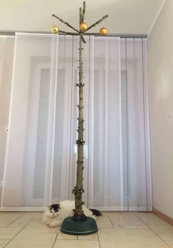 Christmas Tree For Cat Owners
