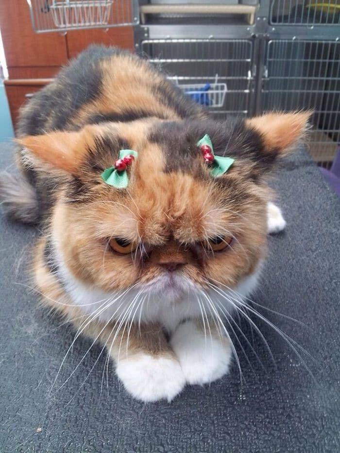 Merry Christmas Ya