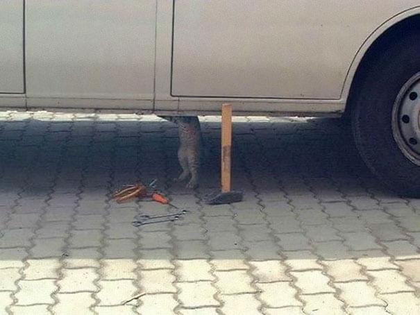животные делают люди вещи 11 (1)