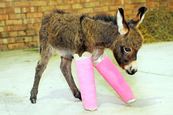 Знакомства примулы - недоношенный ребенок Осел кто получает ее ноги расправиться с Cast к
