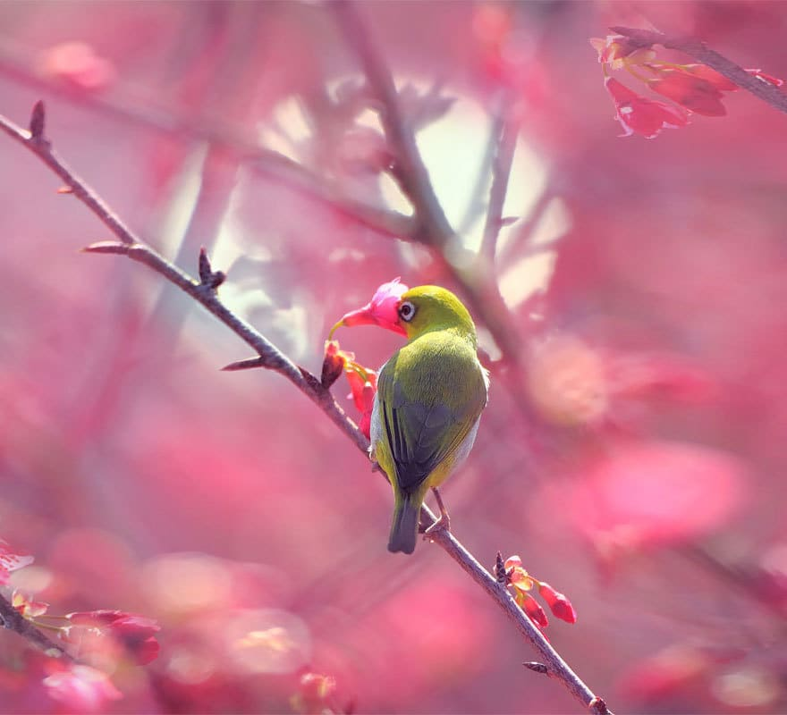 Bird Smelling Flowers