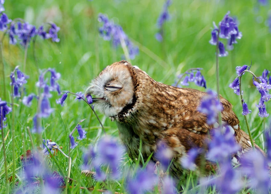 Owl Smelling Flowers