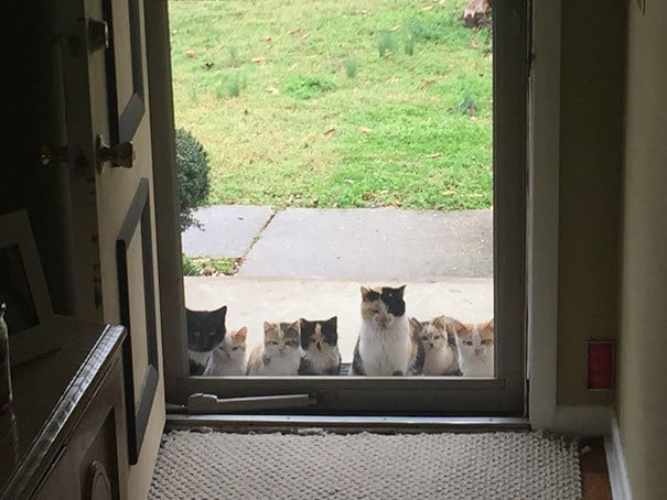 My Parents Started Feeding A Stray Kitten A Couple Weeks Ago. This Was Their Front Porch Today