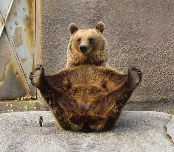 Йога Медведь
