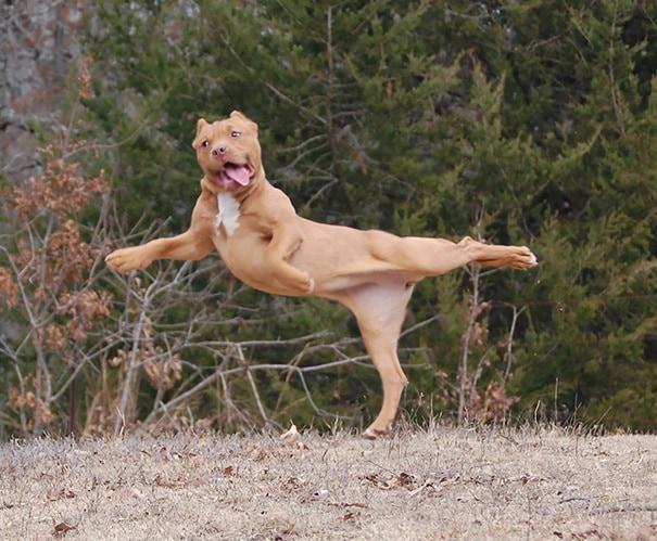 Йога собака берет его на новый уровень