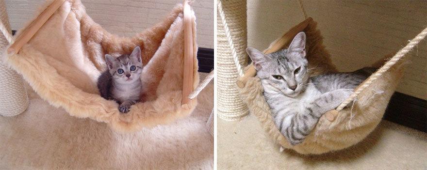 Kitten To Teenager