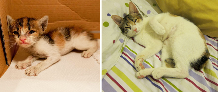 Rescued Cat Now And Then