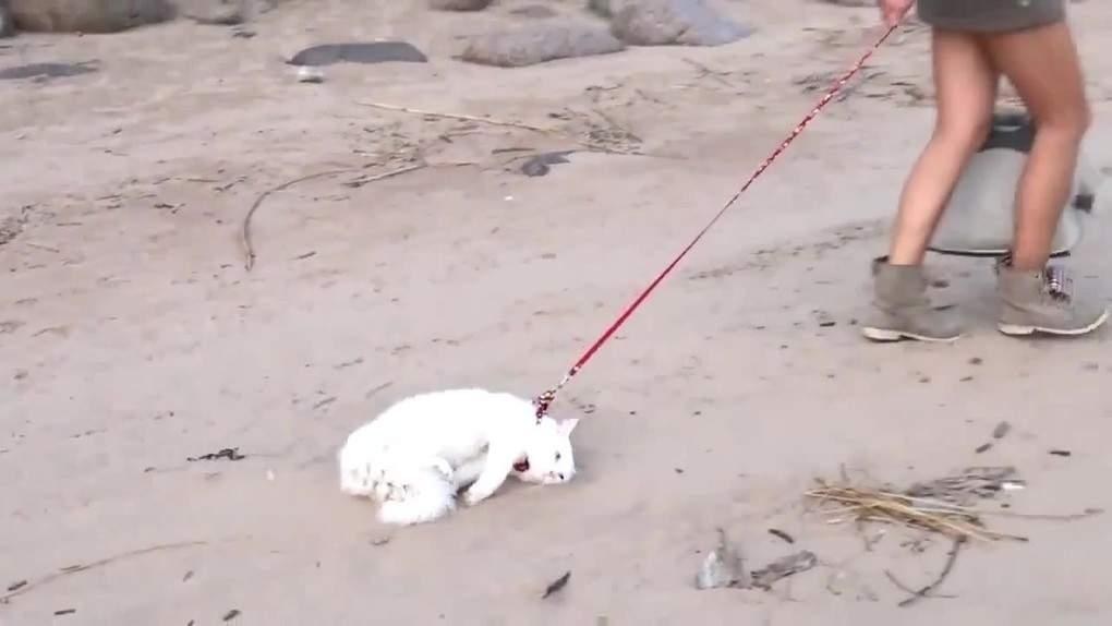 Картинки по запросу кот который не хочет идти гулять