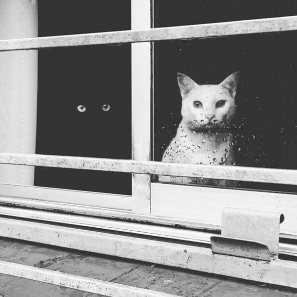 Вглядываясь