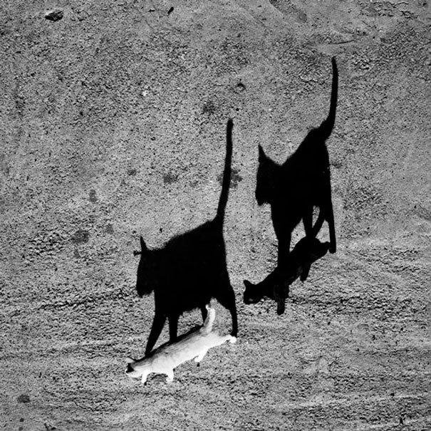 Один White Cat And One Black Cat