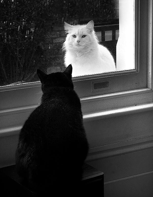 Парадоксальная Зеркало