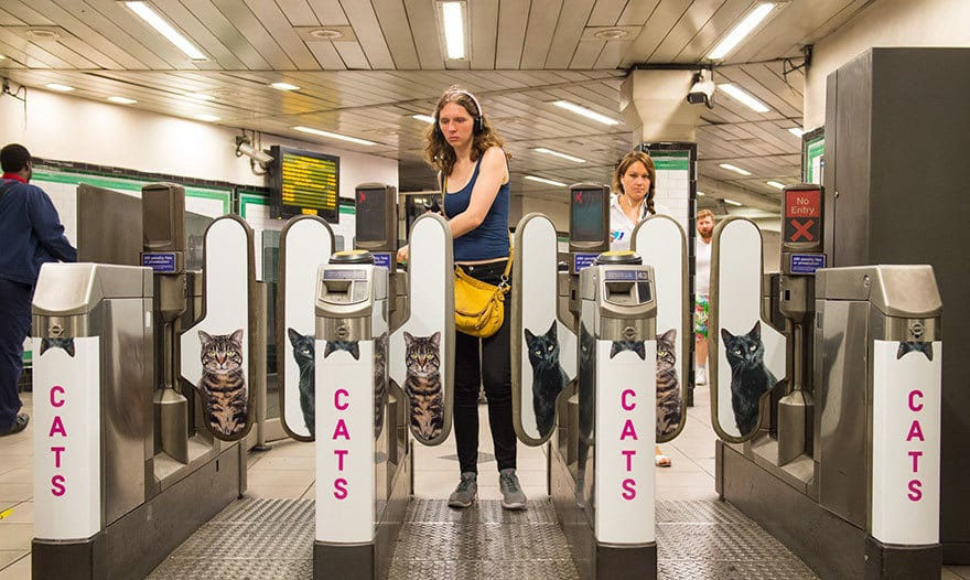 cat-ads-underground-subway-metro-london-10