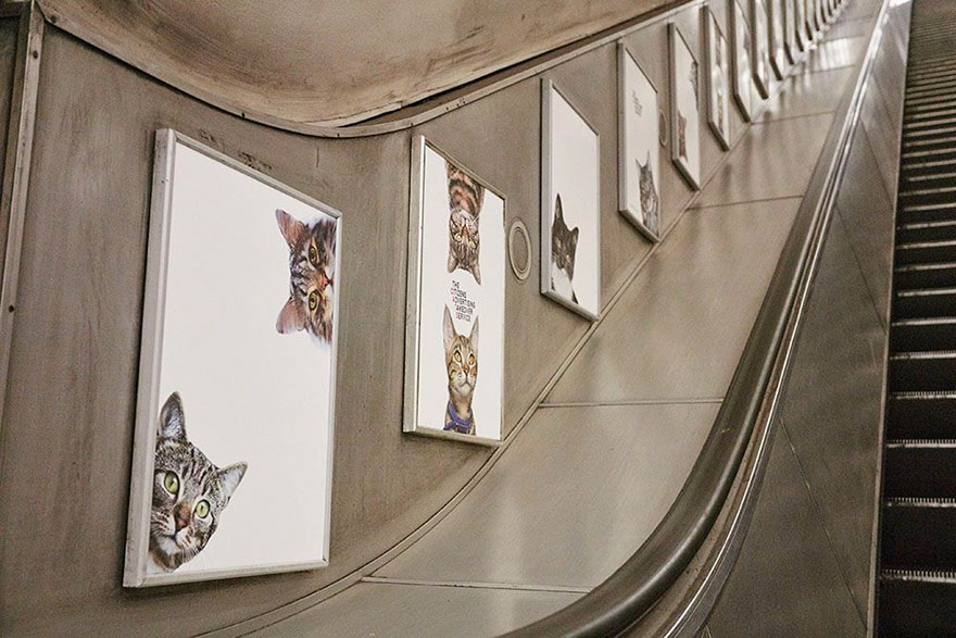 cat-ads-underground-subway-metro-london-4