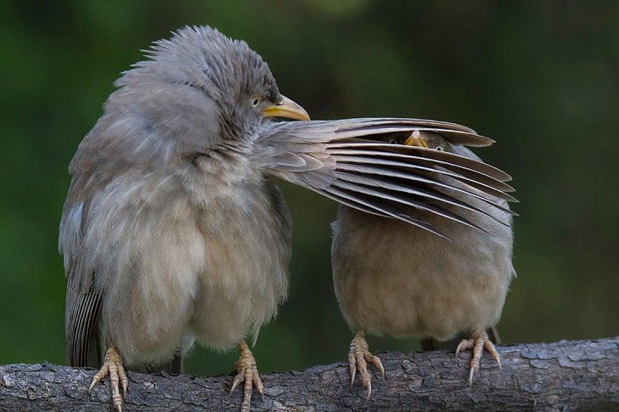 Комедия дикой природы Фото Награды Shortlist