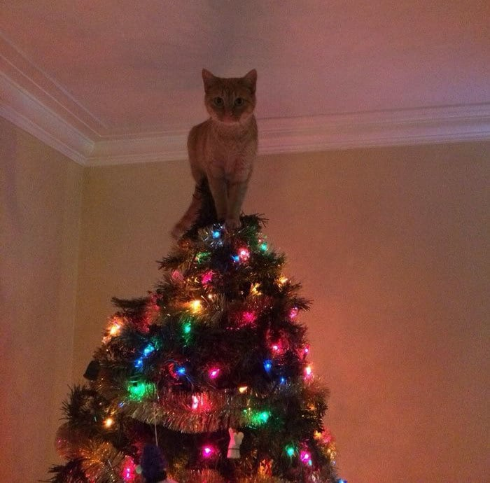 No Need To Put A Star On Top Of The Tree Now...