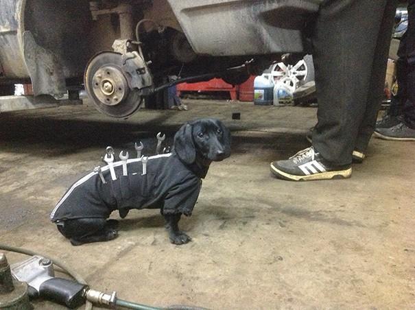 Инструмент-собака Помощь Люди Fix легковыми Cutest Маленький помощник