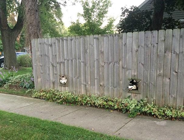Этот творческий Сосед Установленные отверстия для своих собак, чтобы они могли Peek Вне