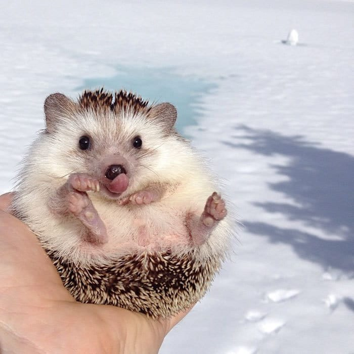 Cute Animal With It