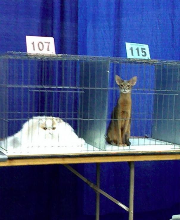 Различные породы кошек имеют разные Температуры плавления