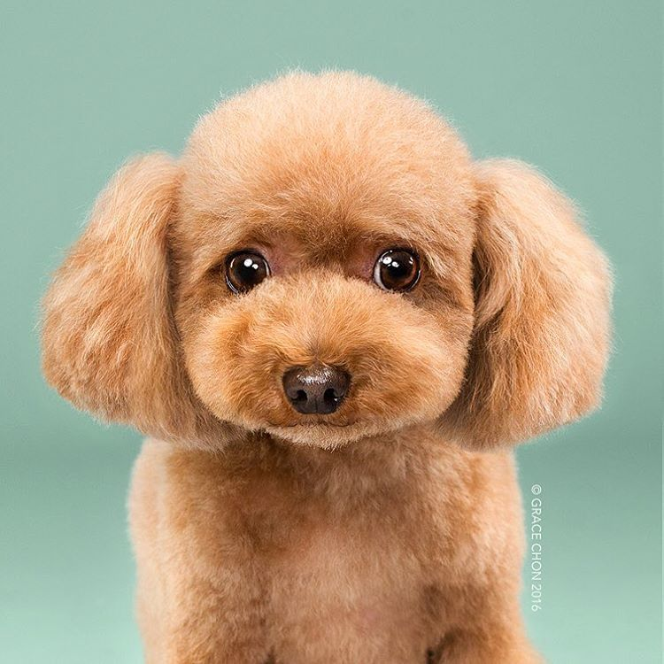 dog-grooming-photography-1