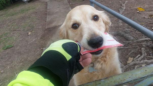 собака любит почта-почтальоном-Пиппа-мартин-Studer-1