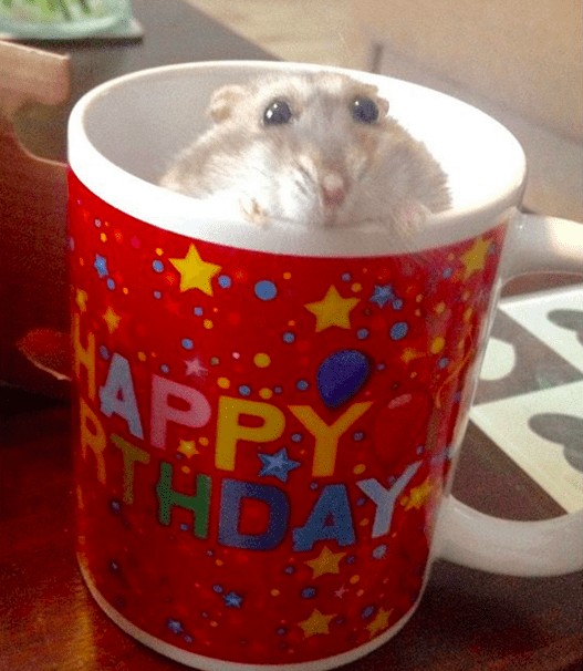 Whatever. Hamsters are lucky little rodents, and I guess all we can do is congratulate them on their awesome lives.