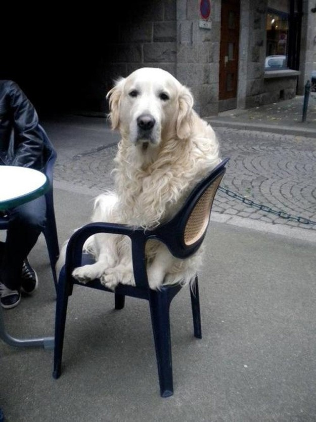 This dog who just wants to fit in.