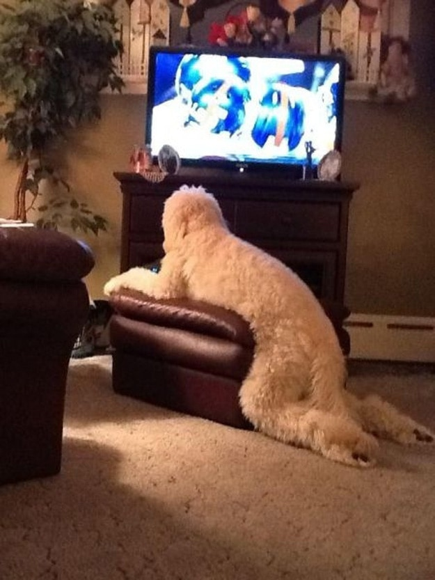This dog who's worried he's wasting too much time watching his stories.