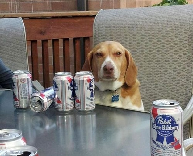 This dog who just wants to enjoy the occasional recreational adult beverage.