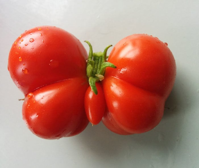 This Tomato That Grew In Our Garden Is Shaped Like A Butterfly