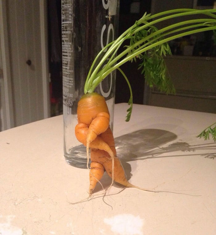 A Carrot Bustin A Move