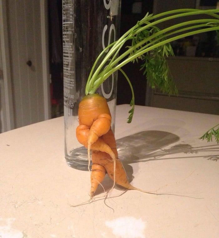 A Carrot Bustin A Move
