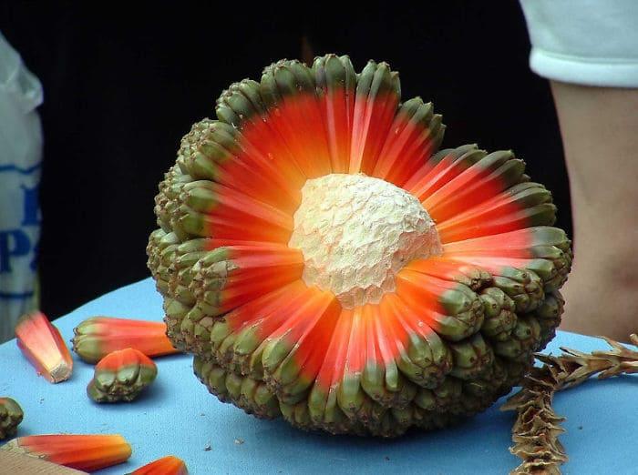 Fruit Of The Hala Aka Puhala Tree