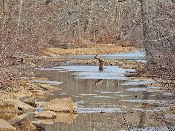 Photo My Mom Took Today. Deer Slipping On Ice